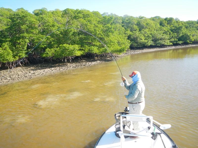 Redfish Landing Guide Service: FULL DAY FLY FISHING