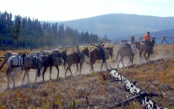 Scapegoat Wilderness Outfitters: 7 day Wilderness Elk or Mule Deer Hunt