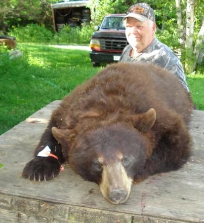 Macfarlane Sporting Camps: Black Bear Hunts