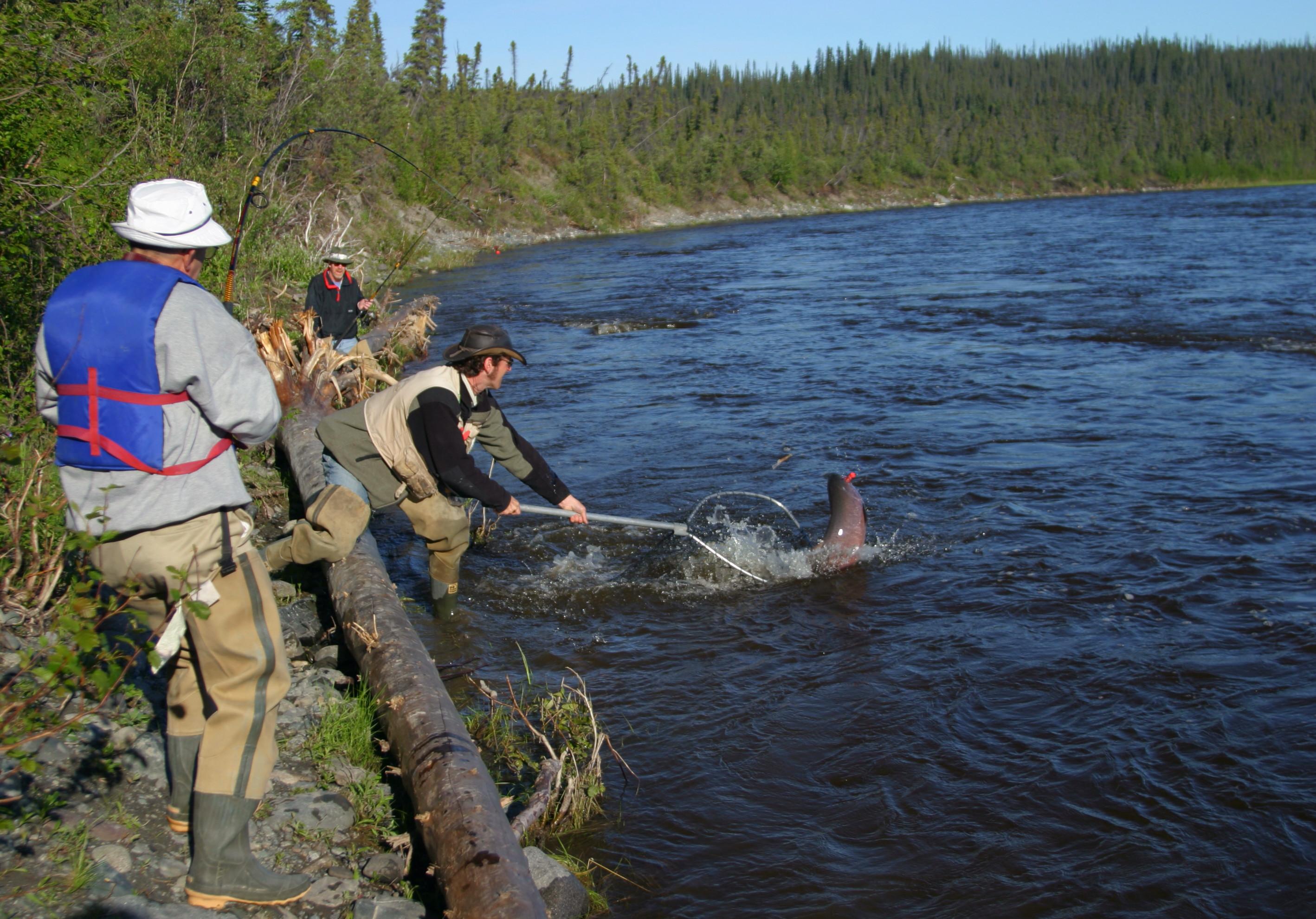Copper River Salmon Charters: Gulkana River Fishing Charters