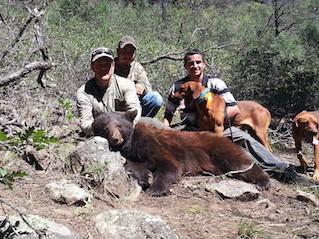 Sierra Blanca Outfitters: Black Bear Hunt