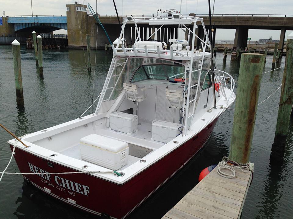 Reef Chief Charters: Shark Fishing Trip