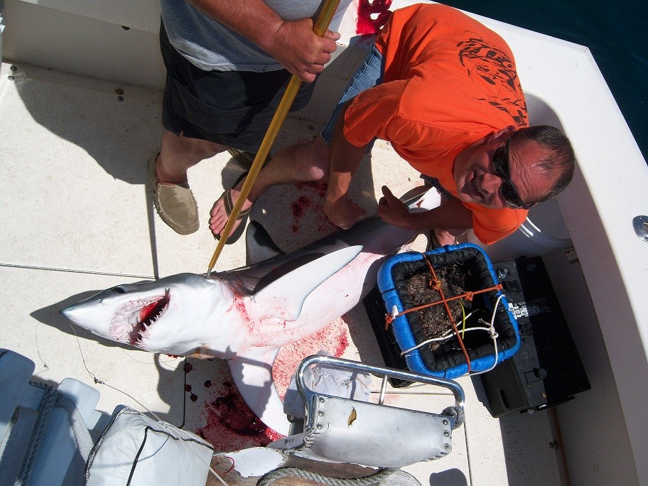 Over Board Sportfishing Charters: shark fishing