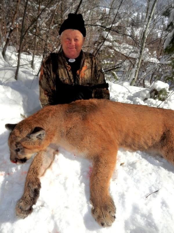 Bearpaw Outfitters: Idaho Tom Cougar Hunting