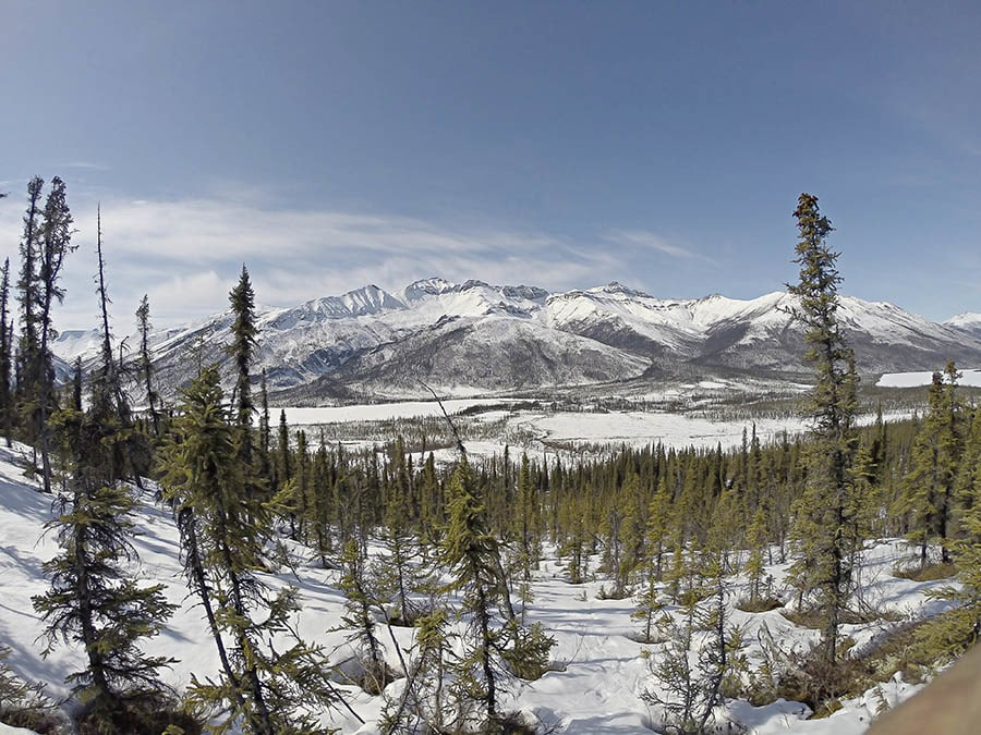 Mountain Monarchs Of Alaska: Spring Central Arctic Hunts 2017 Wolf & Wolverine Trapline Trips
