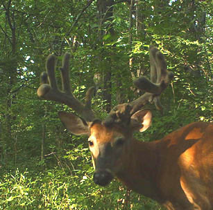 Bighorn Outfitters Illinois: Combo Hunt - Archery / Firearms