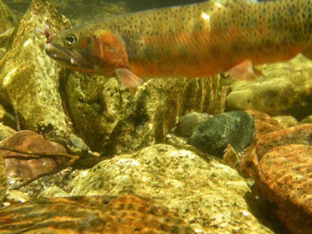 The Solitary Angler: Trinchera Ranch