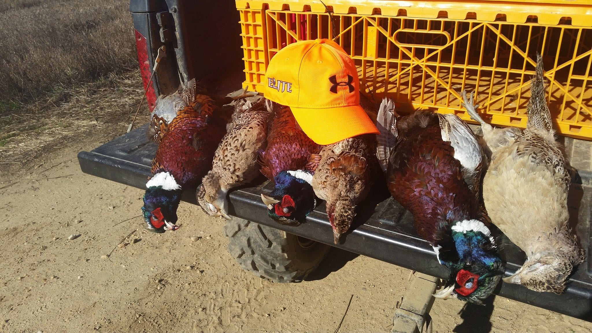 Elite Long Island Outfitters: Upland Bird Hunts