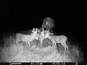 Beamers Guide Service: Kansas Rifle Deer Hunt (10-Day Semi-Guided)