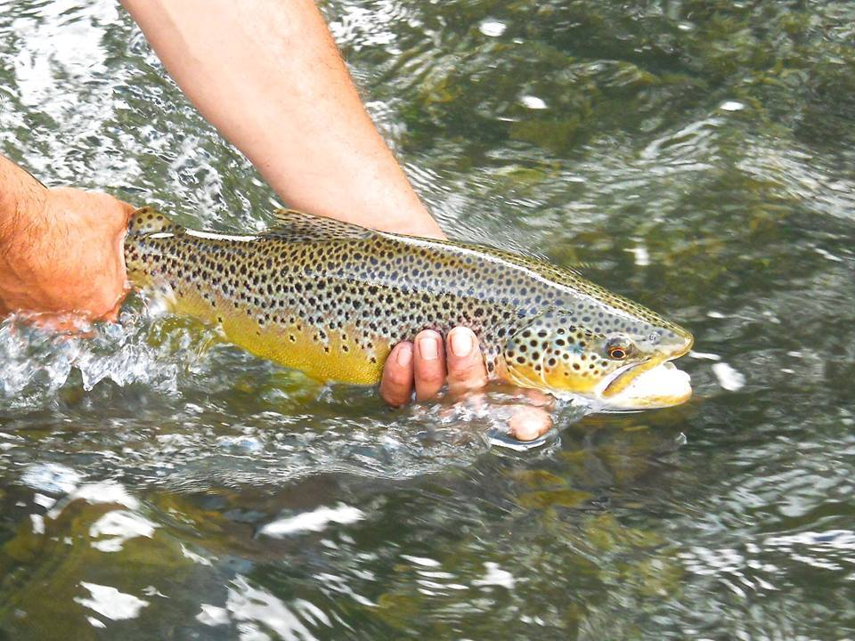 Cross Current Guide Service & Outfitters: Upper Delaware River