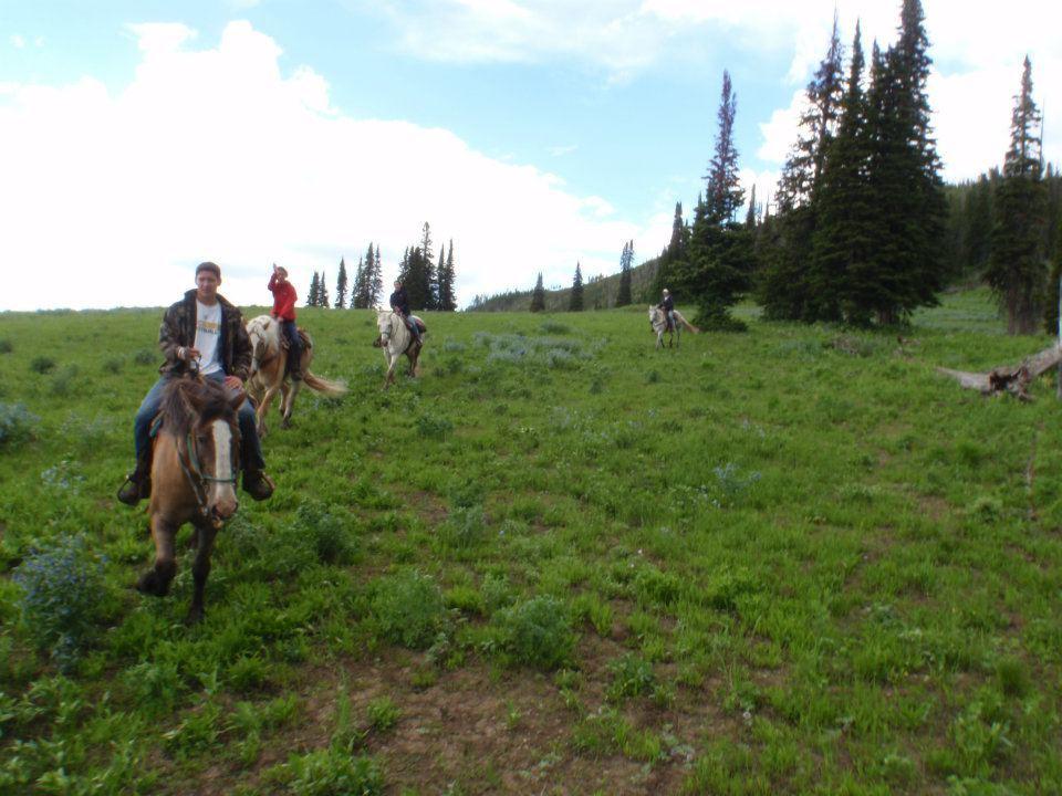 Wilderness Trails Inc: Horseback Trips