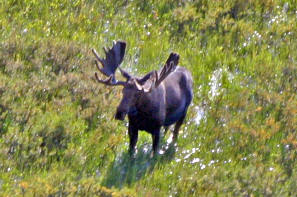 High Adventure Air Charter Guides & Outfitters: UNGUIDED MOOSE HUNTS