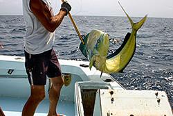 Tuna Duck Sportfishing: 1/2 Day Fishing Trip