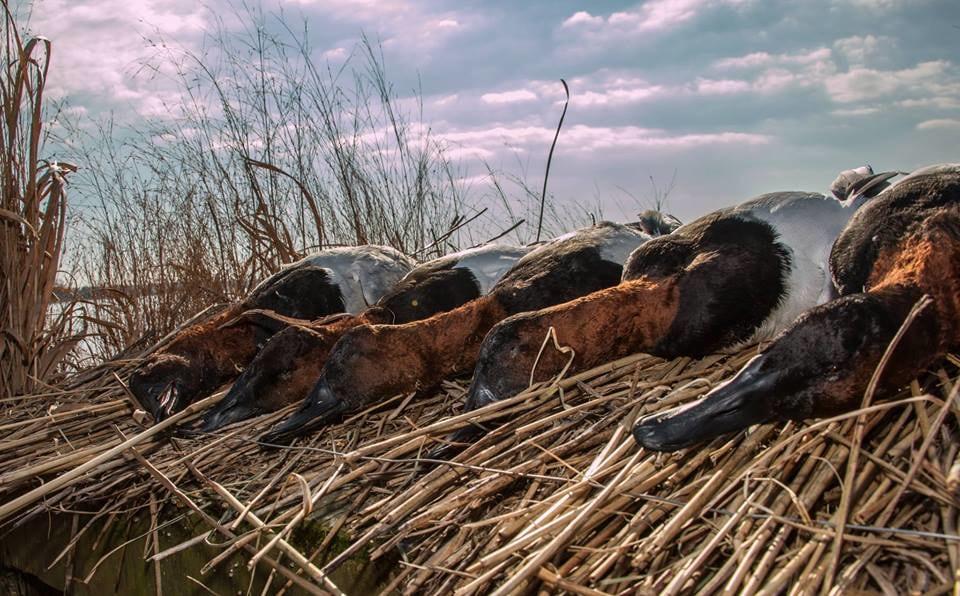 Chesapeake Guide Service: Puddle Ducks