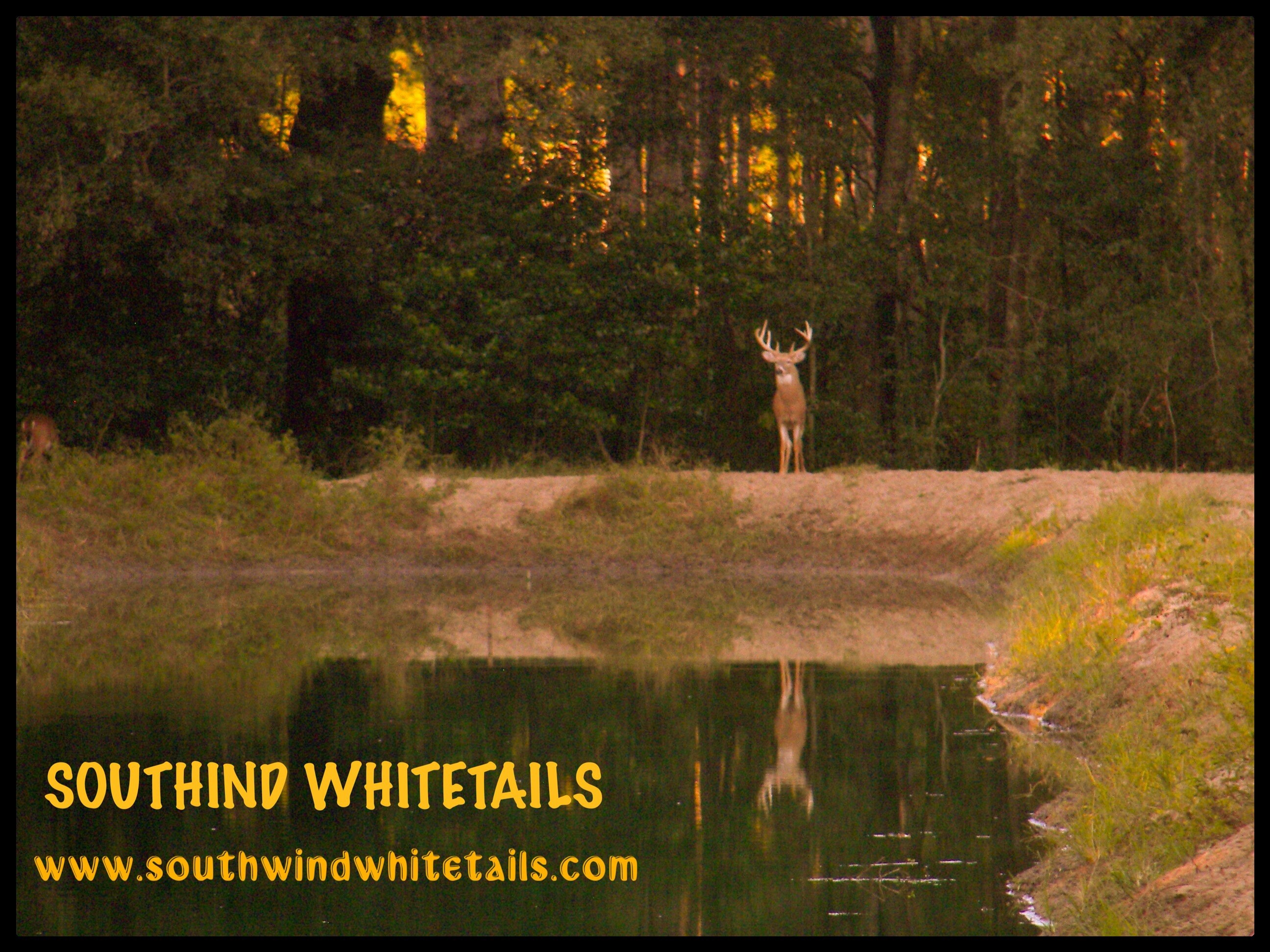 Southwind Whitetails: Axis Deer Hunts