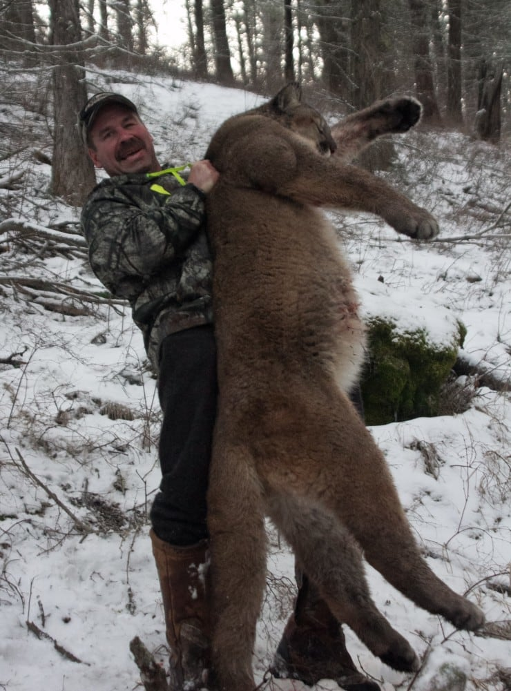 Swan Mountain Outfitters: Mountain Lion Hunts