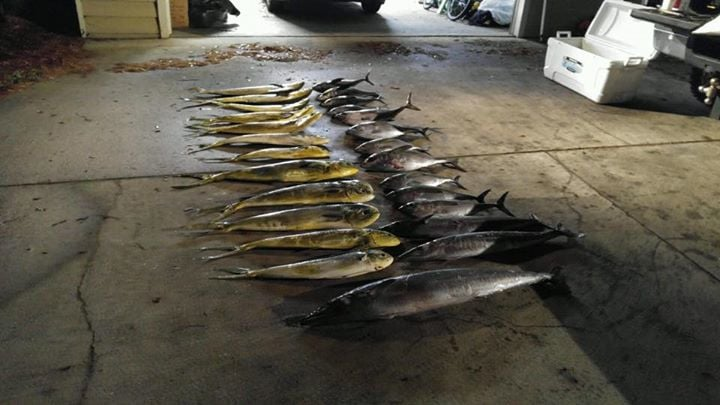 Vindicator Fishing: Bluewater / Gulfstream