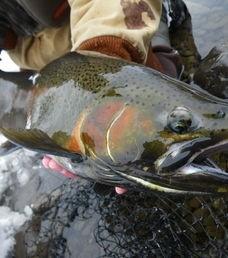 The Douglaston Salmon Run: Fall 2 Afternoon M-Thursday