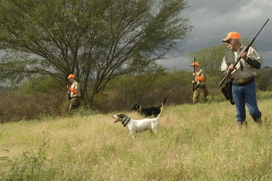 Inflight Outfitters: Bobwhite Quail Hunt