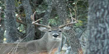 Gray Ghost Plantation: Whitetail Deer Hunting