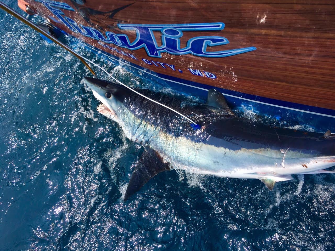 Finatic Sportfishing Charters: 18 Hour Offshore Trip