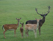 Cleghorn Ranch: BLACKBUCK BUCKS Hunt