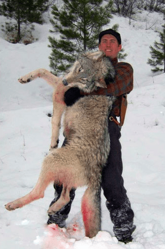 Korell Outfitters: Wolf Hunts