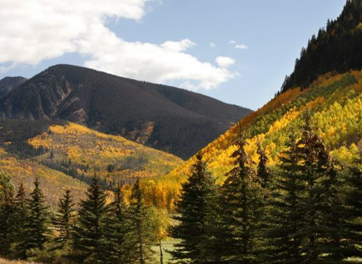 Bear Creek Hunting Adventures: Mountain Lion Hunts