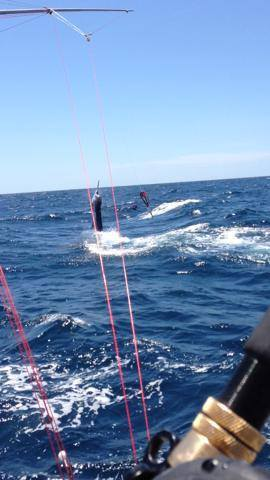 Go Deep Sportfishing Llc T A Muff Diver Charters: Offshore