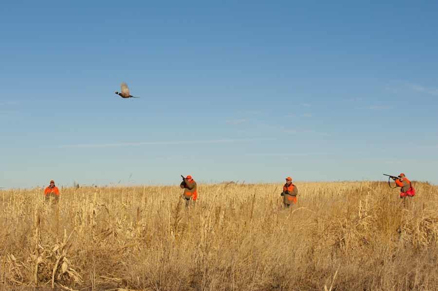 Thunderstik Lodge: 3 Day & 4 night South Dakota Pheasant Hunting Package