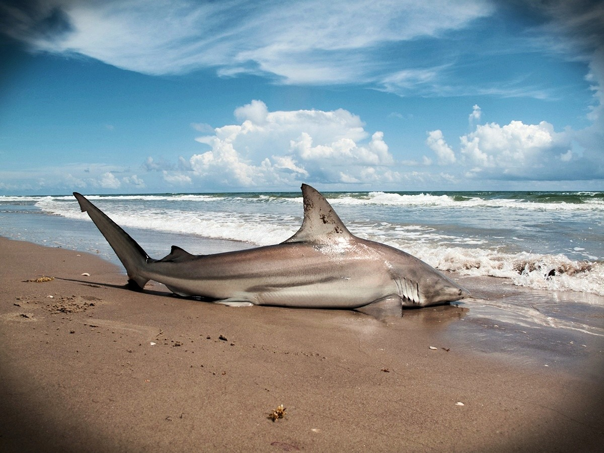 Ocean Epics: Full Day Shark Fishing
