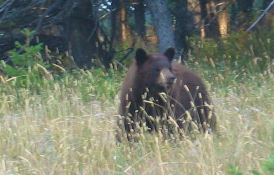 Gods Country Outfitters: SPRING BLACK BEAR HUNT