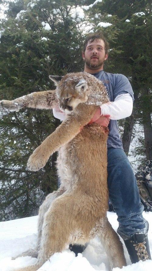 Diamond D Ranch: Predator Hunts