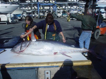 Offshore Account Charters: 3/4 Day Offshore Trolling & Bottom Fishing