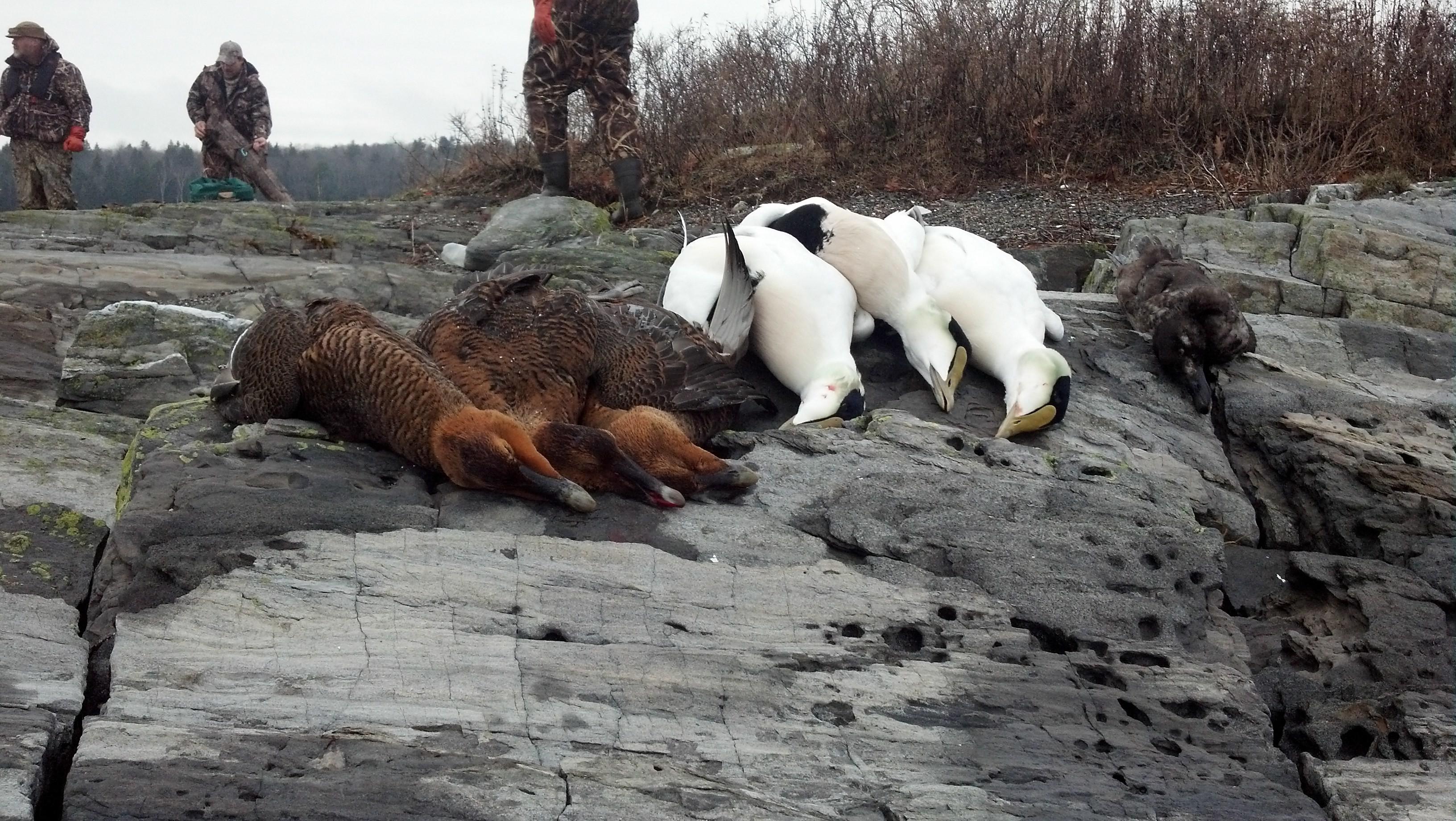 Reddog Guide Service: Sea Duck Hunt