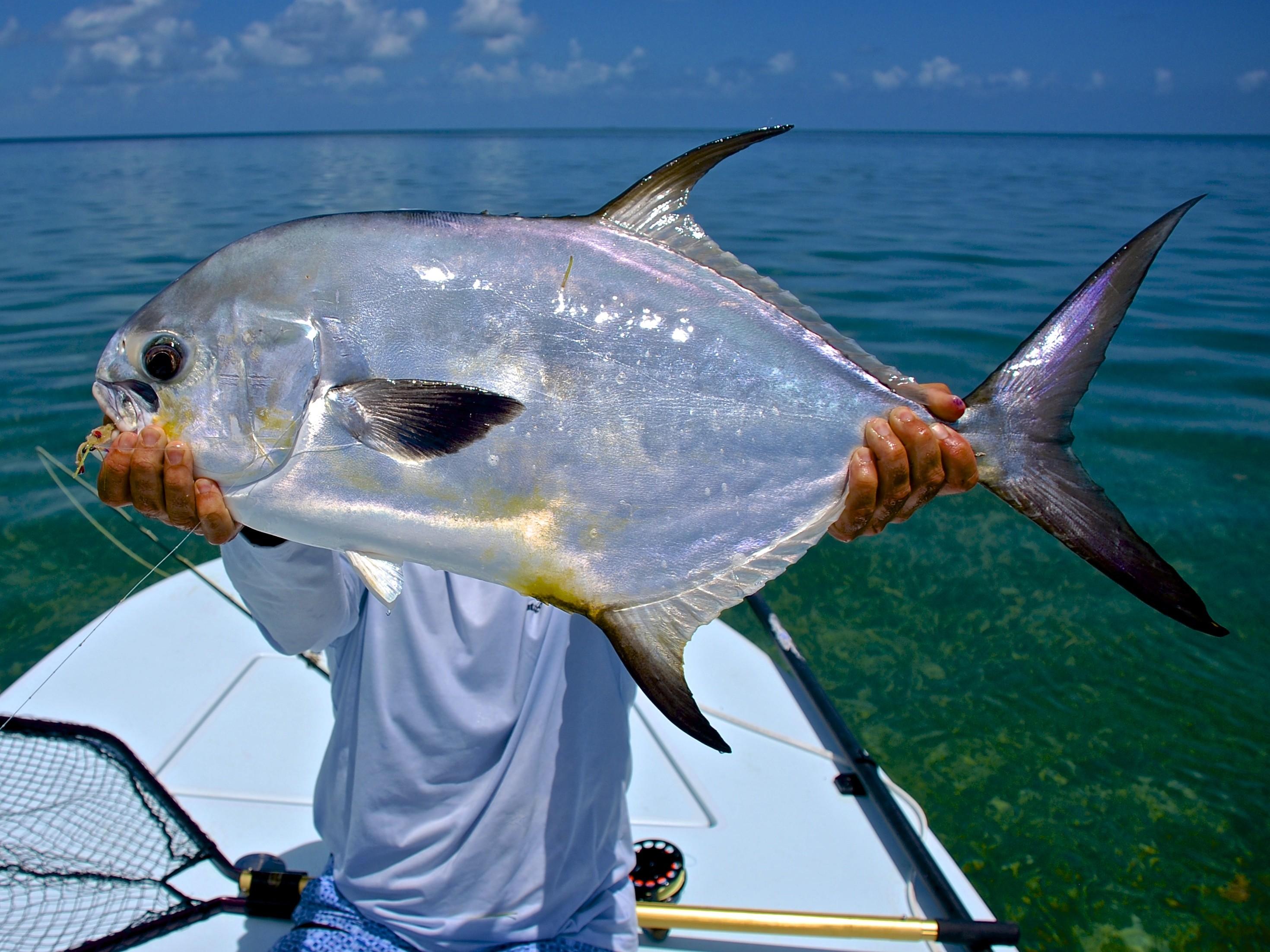 A Fishing Guide. Llc: Skiff Fishing Trips