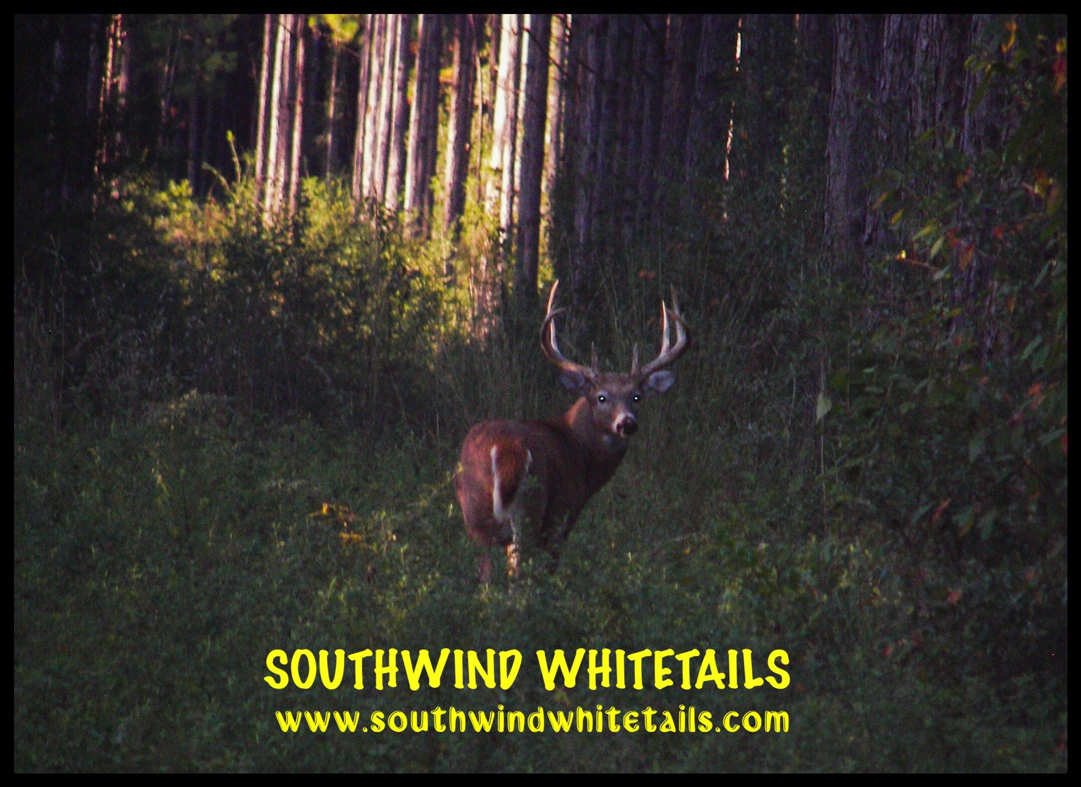 Southwind Whitetails: Whitetails Hunt