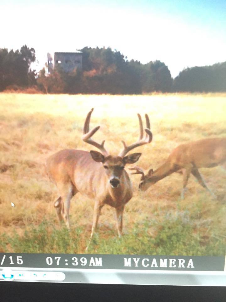 Donihoo Bucks: Whitetail Deer Hunt