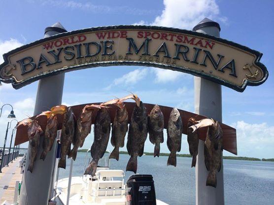 Catchalottafish: Full Day Trip