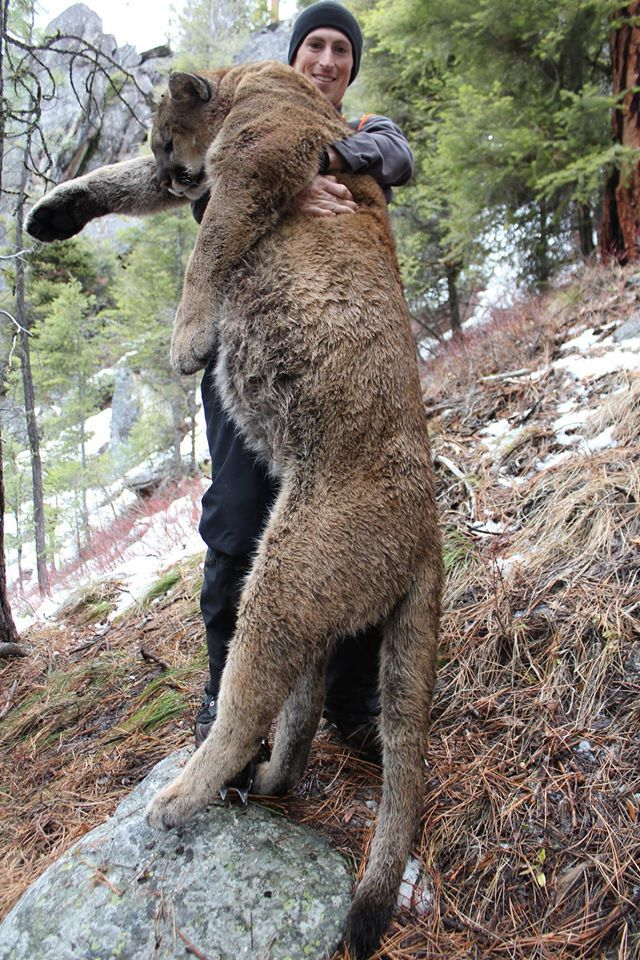 Elk Springs Outfitters: Mountain Lion Hunt