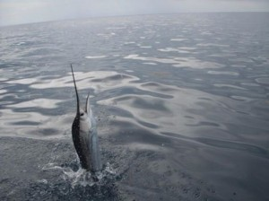 First Choice Florida Keys Charters: 1/2 Day Fishing Trip
