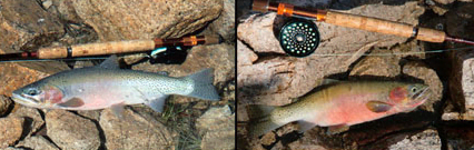 Korell Outfitters: Fishing & Pack Trips