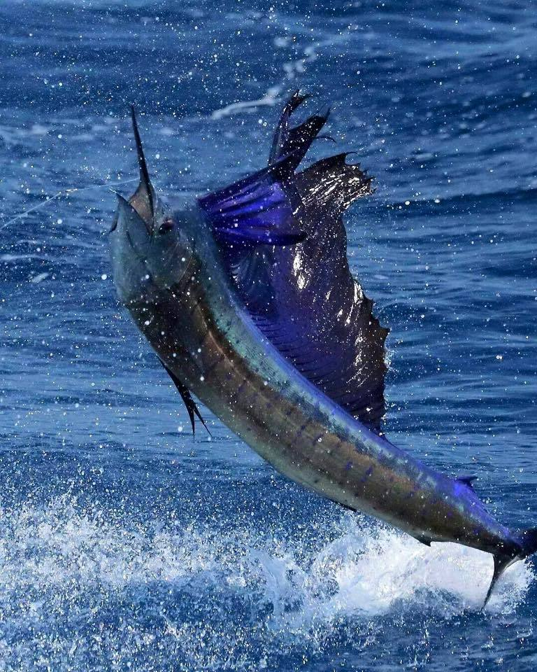 Sailfish Marina Charter Fleet: Offshore Fishing Trip