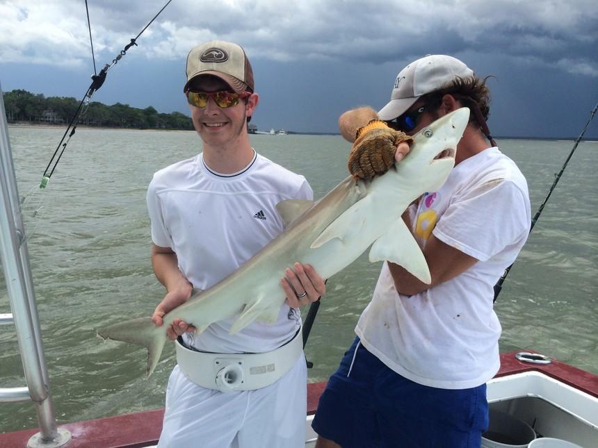 Top Shot Sport Fishing Charters: Shark Fishing Trip