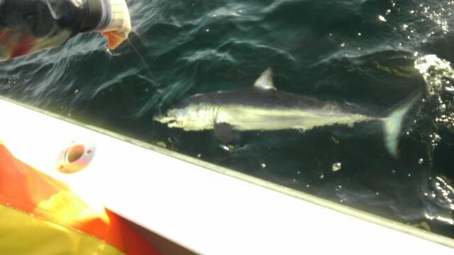Codfather Fishing Charters: Tuna Charter