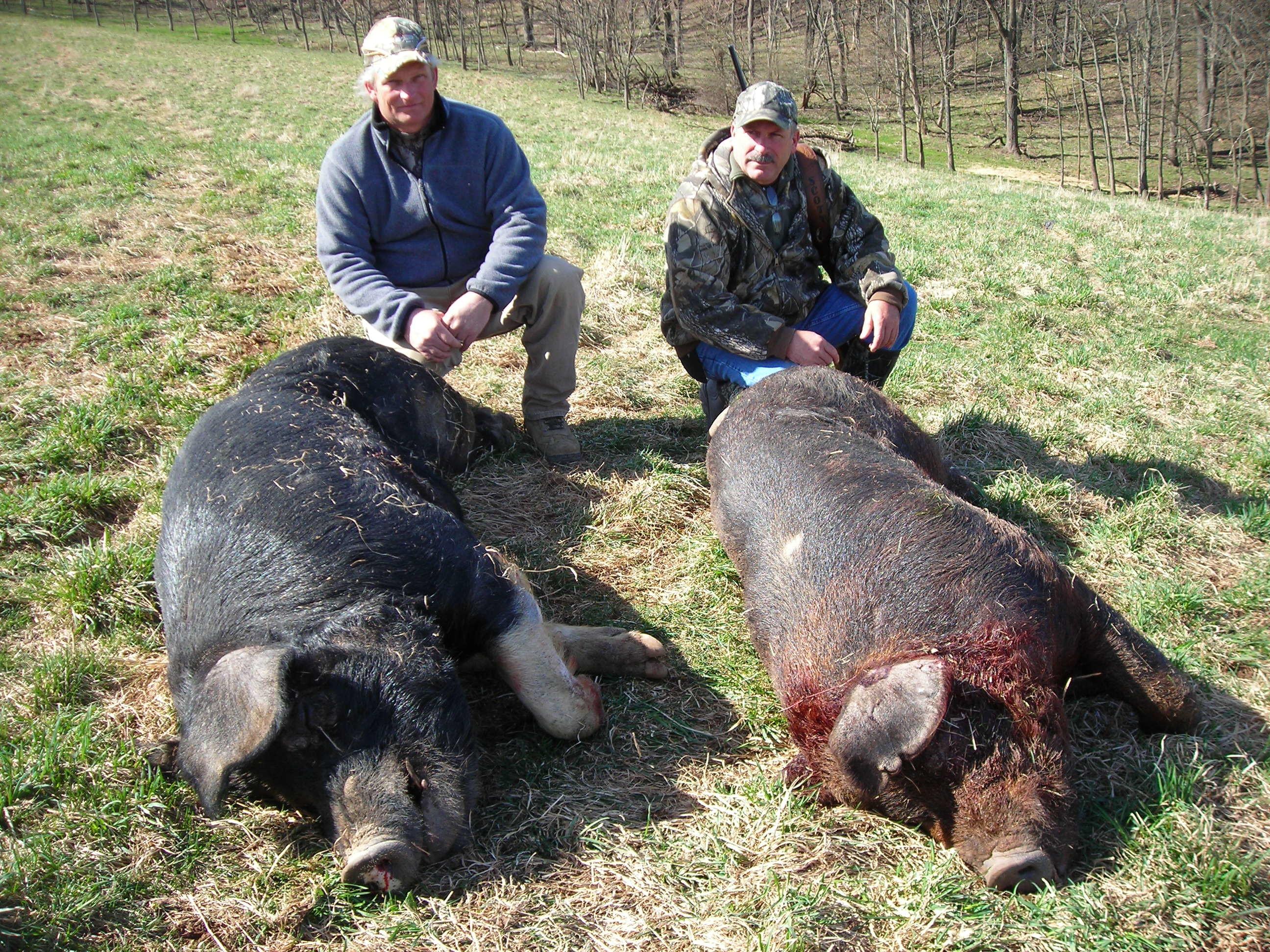 Happy Hollow Hunts: feral hogs