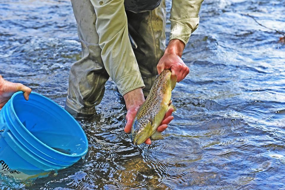 The Douglaston Salmon Run: Summer Full Day F-Sunday