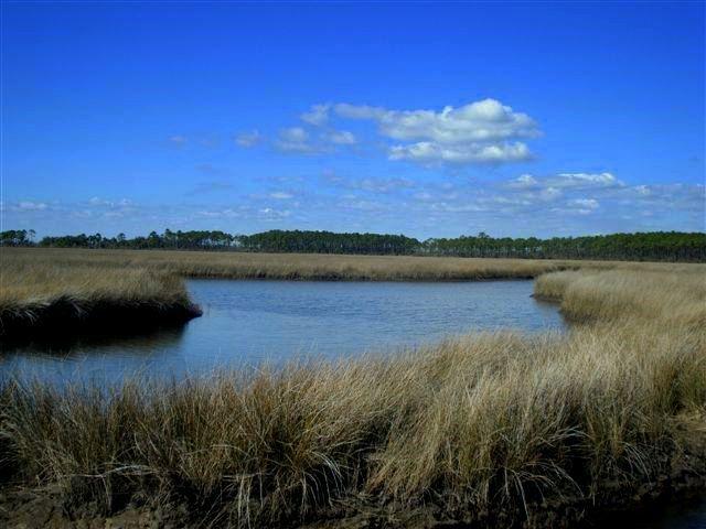 Tideline Sports: Biloxi Marsh Redfish