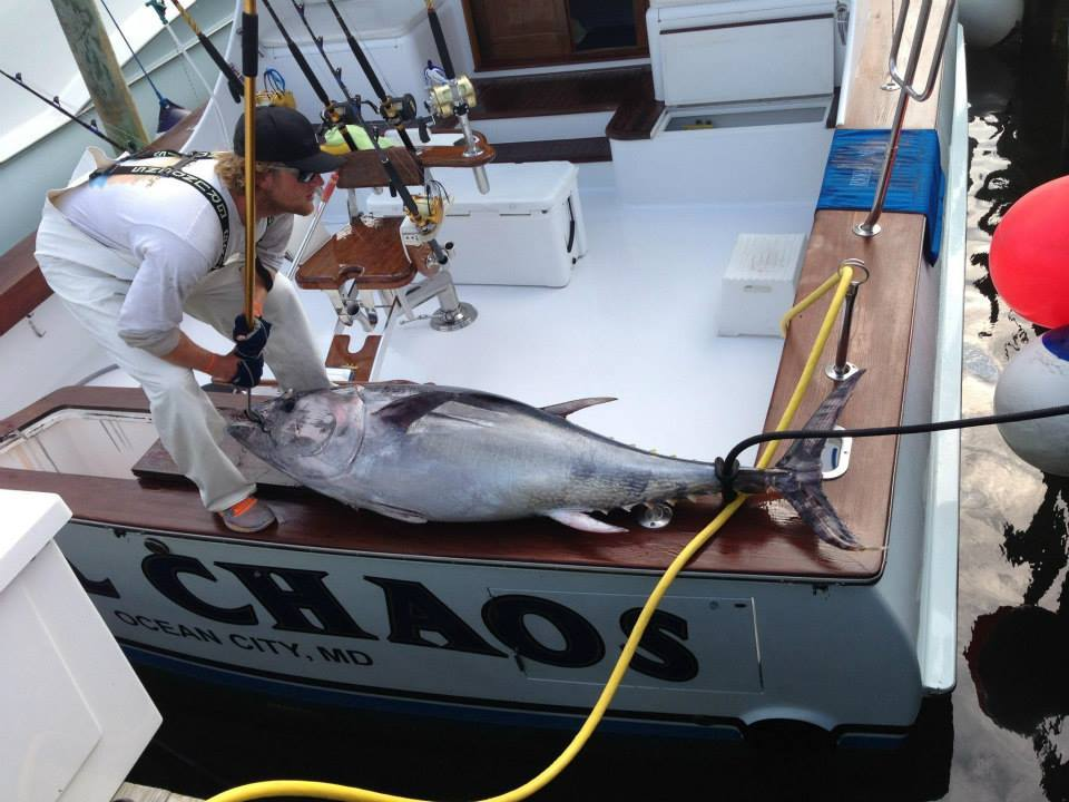 Reel Chaos Charters: Offshore
