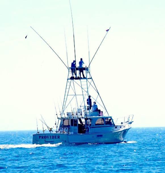 Northeast Sportfishing: Shark FIshing